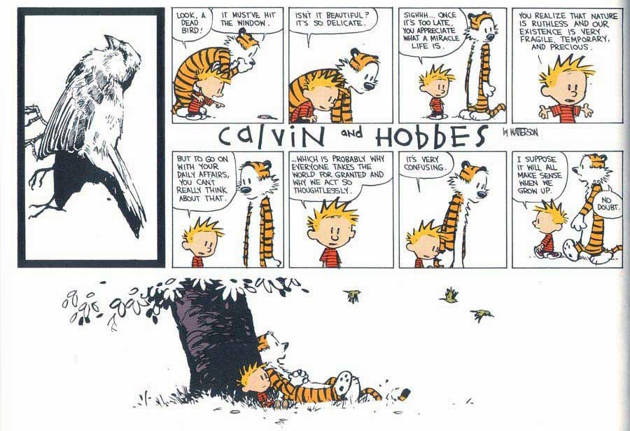 Calvin and Hobbes The Days are Just Packed review